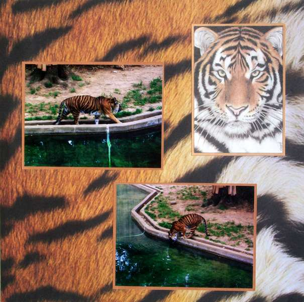 Washington DC 2012 - Page 50 - National Zoo: Tiger