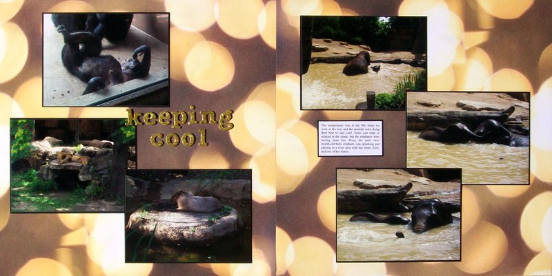 St. Louis 2013 - Zoo - Keeping Cool