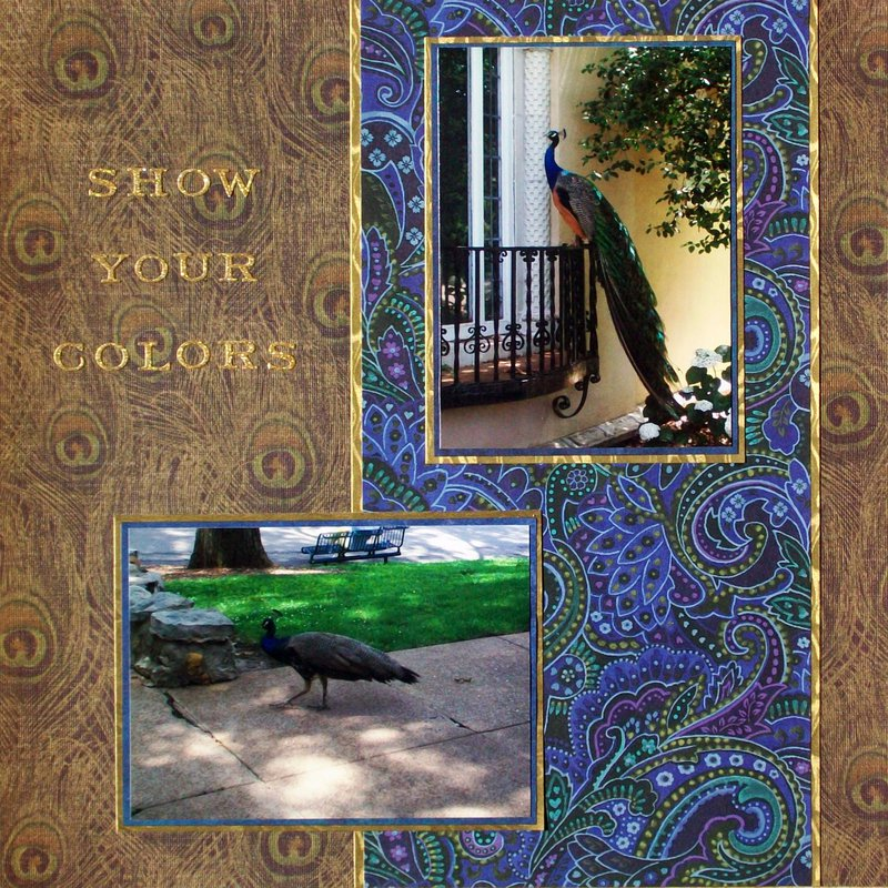St. Louis 2013 - Zoo - Peacocks