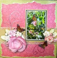 Pink Butterflies in my Garden