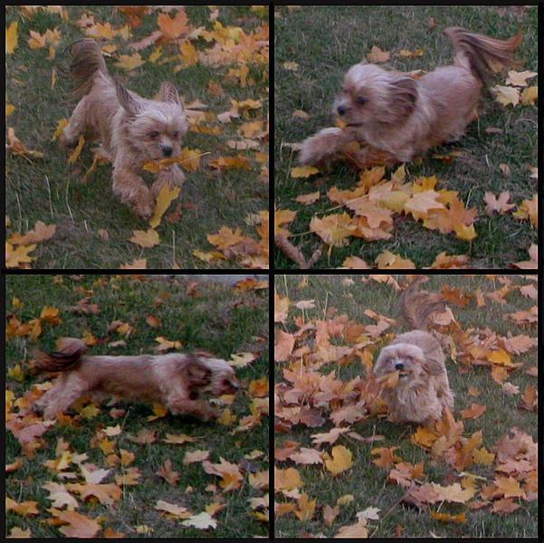 POD#3 - Finnegan In The Leaves