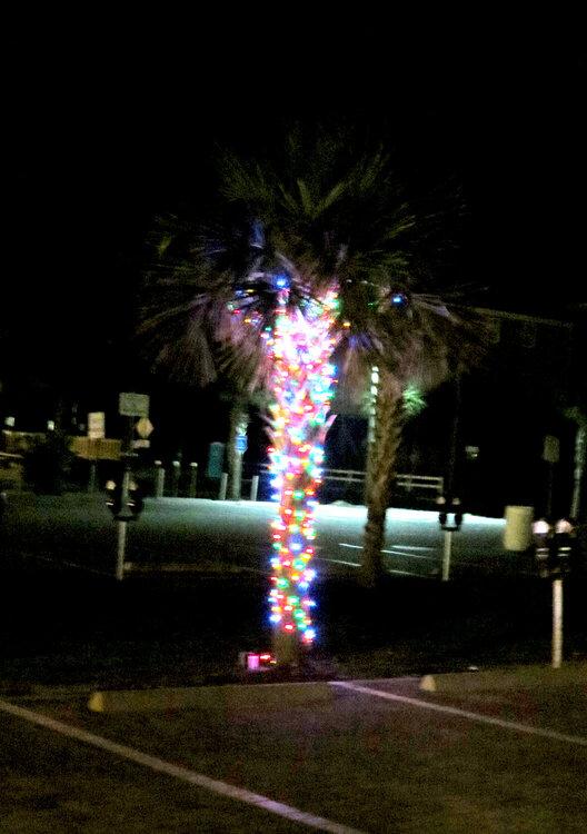 Garden City Beach Christmas Tree