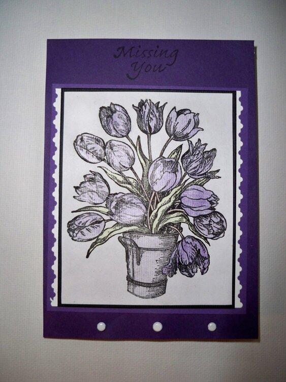 Purple Tulip Missing you