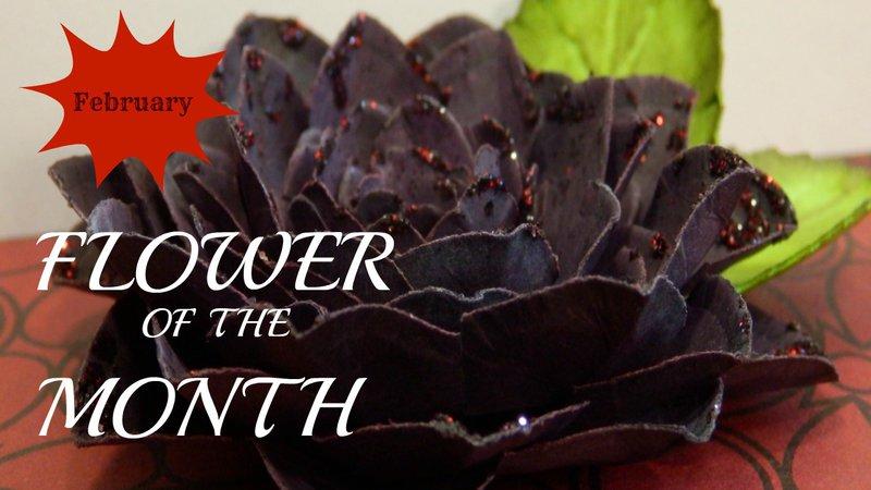 Flower of the Month-Black Dahlia February 2015