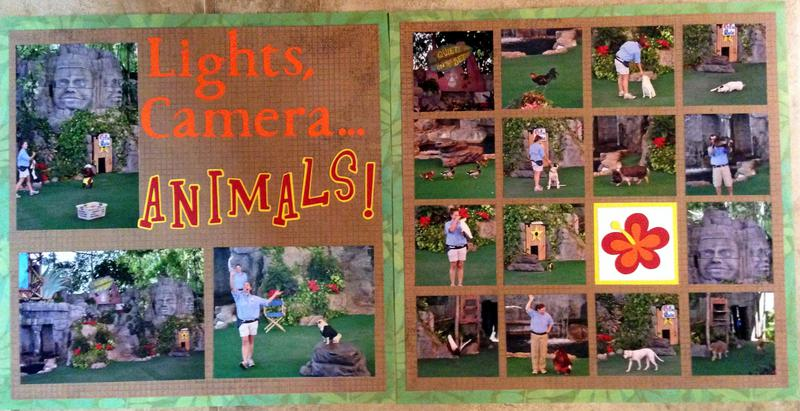 Lights, Camera, Animals