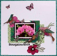Bougainvillea - Kaisercraft DT