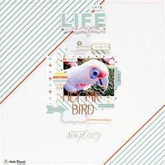 Hey Mr Bird