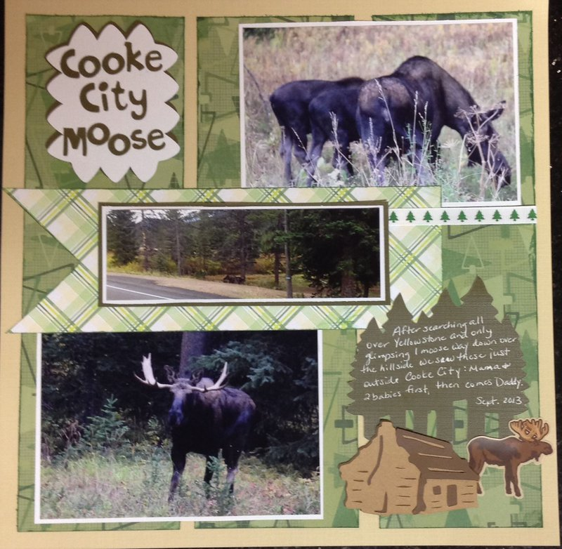 Cooke City Moose