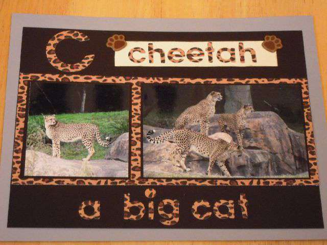 C - Cheetah