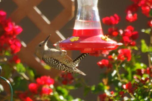November Mini Bird