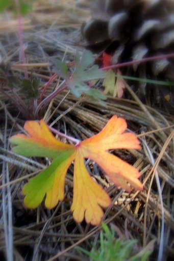 September mini Leaf