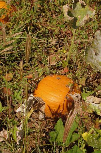 October mini  Orange