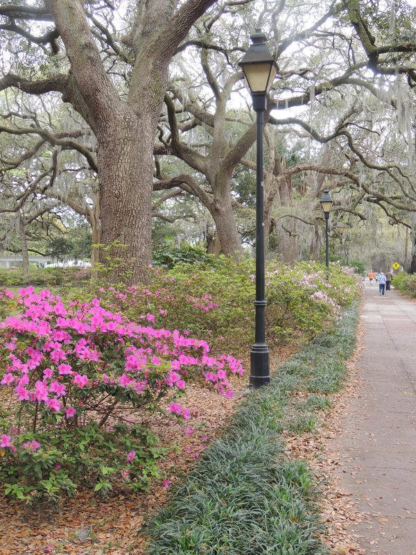 Early Spring in Savannah