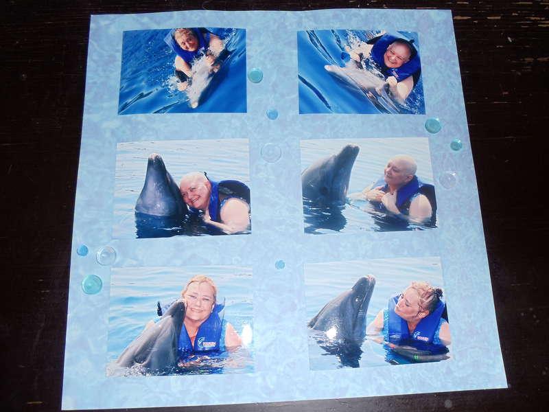 Dolphin Adventure in Mexico