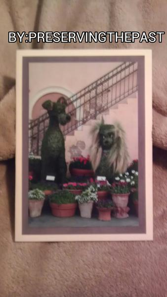 Lady and Tramp Photo Card