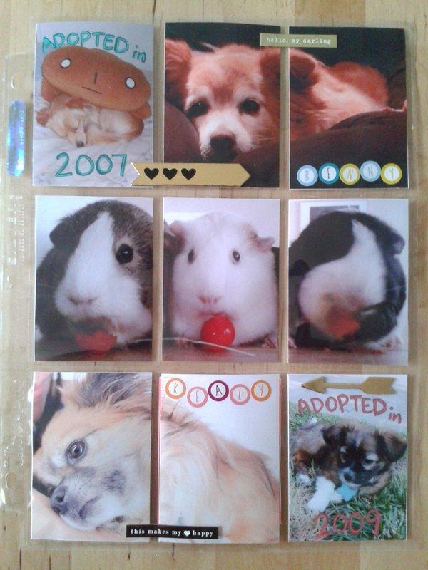 Pocket Letter - My Pets