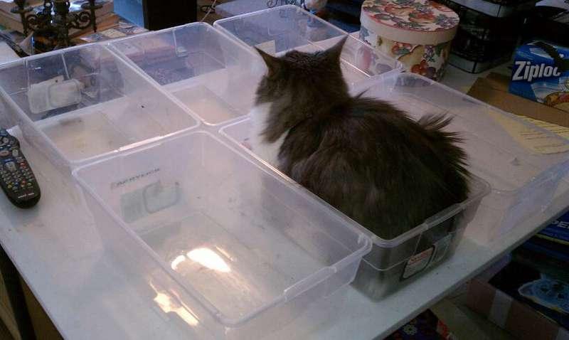 Zeke helps me sort stuff out in my scraproom