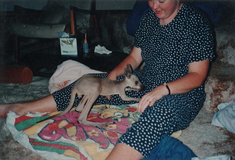 "My first grey kangaroo orphan ""Hammond"""