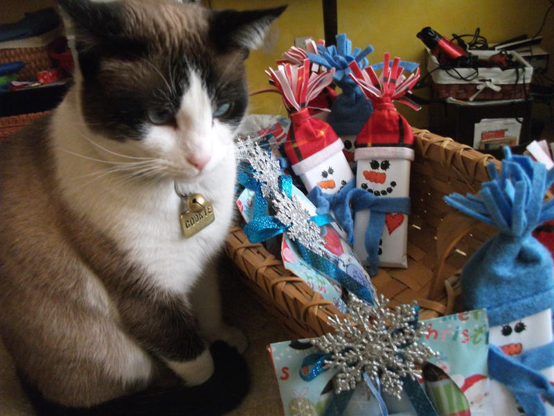 Xmas gifts and my cute Kuka ( Cookie ).