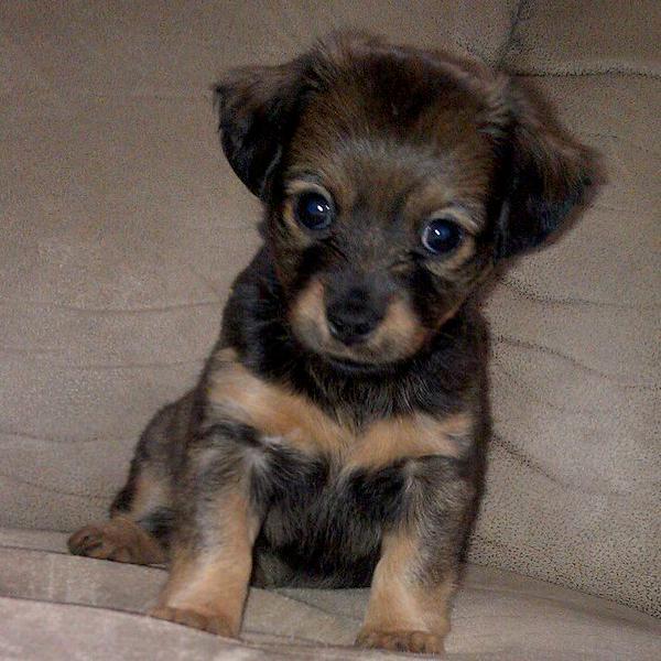 my puppy Zoey