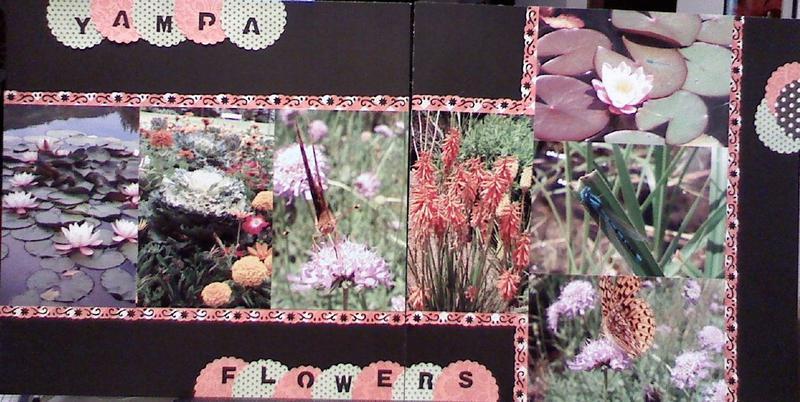 Yampa Flowers