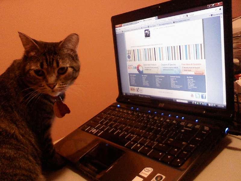 Computer Savvy Kitty