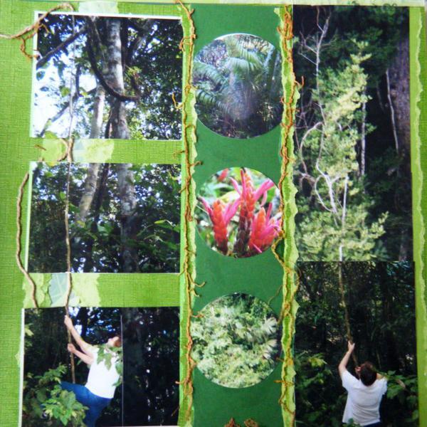 Panama. The rainforest
