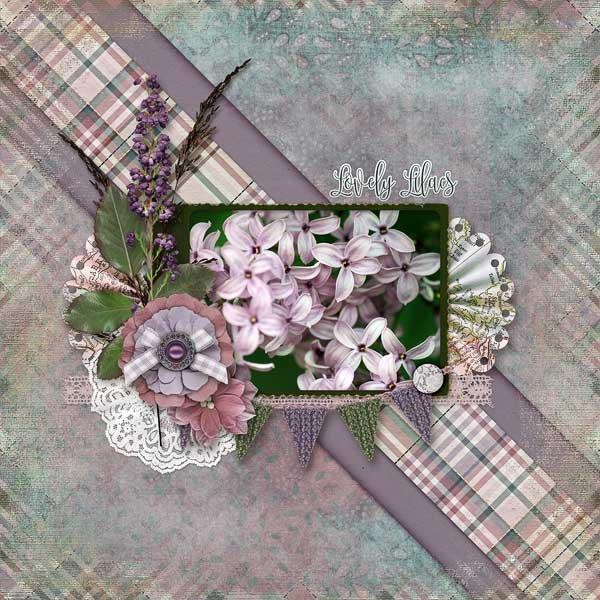 Lucious Lilacs