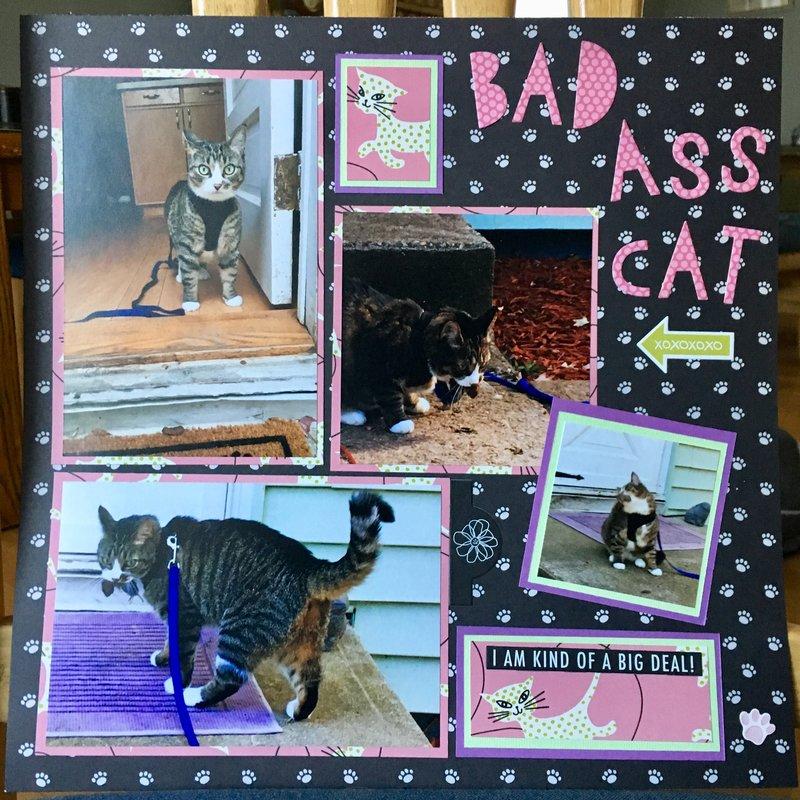 Bad A$$ Cat