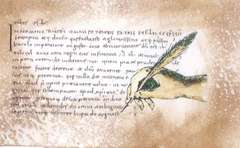 LaBlanche Unfinished Script