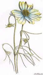 LaBlanche Spring Flower
