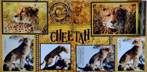 SAFARI - Botswana Cheetah