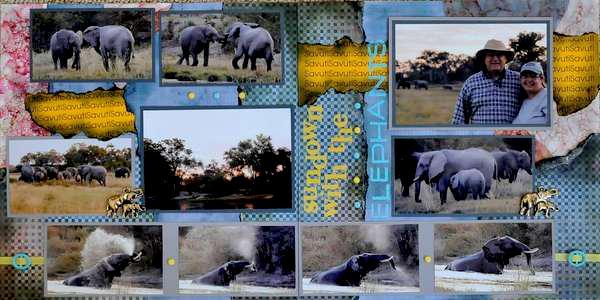 SAFARI - Botswana Elephants. . .