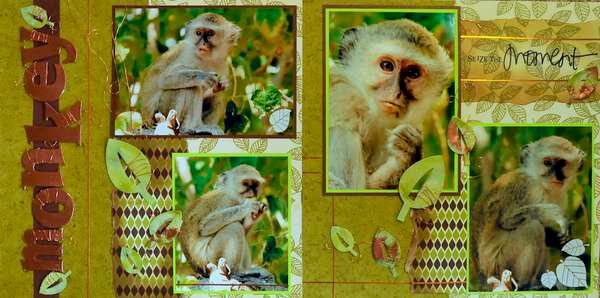 SAFARI - Botswana  Monkeys