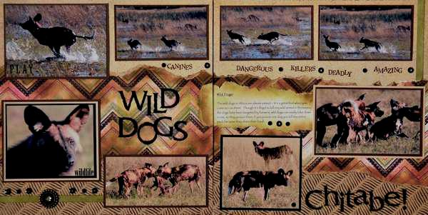 SAFARI - Botswana Wild Dogs