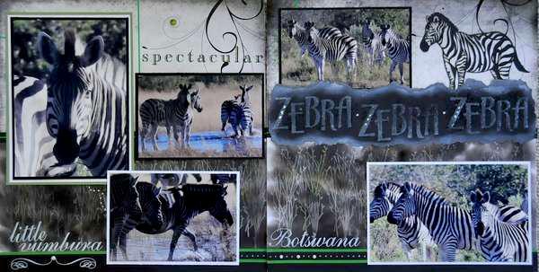 SAFARI - Botswana Zebra