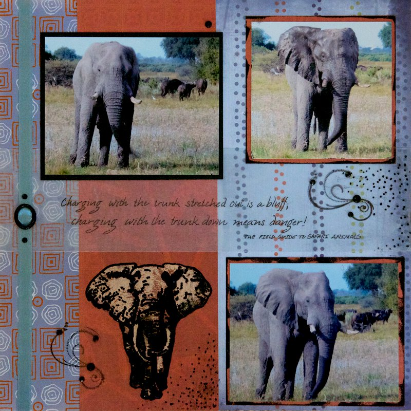 SAFARI - Botswana Elephant - LEFT SIDE