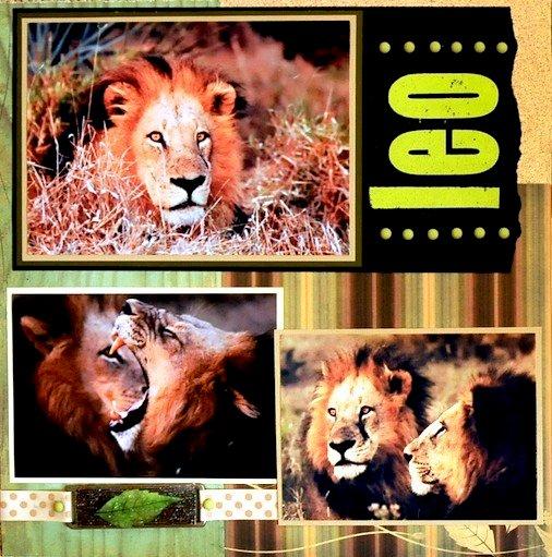 SAFARI:  Leo - Botswana, Africa - LEFT SIDE