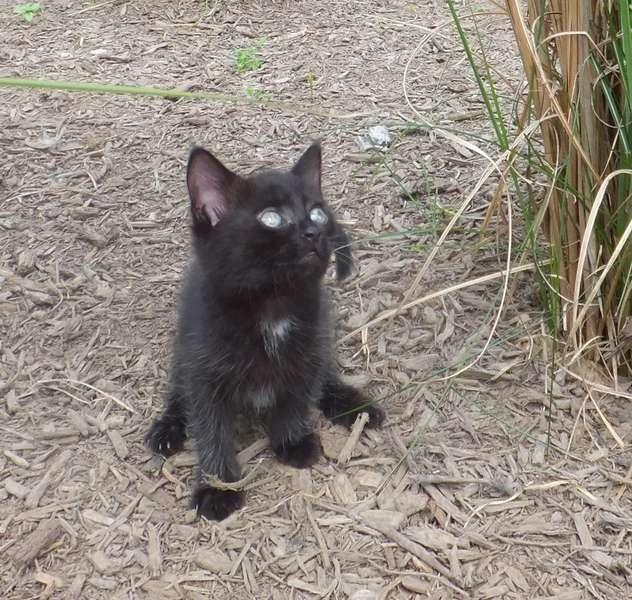 Kitty update