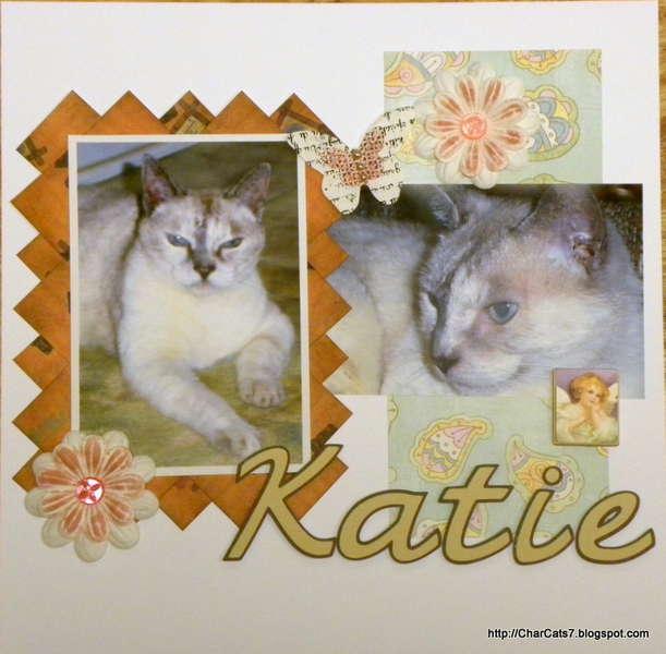 Katie- my angel kitty