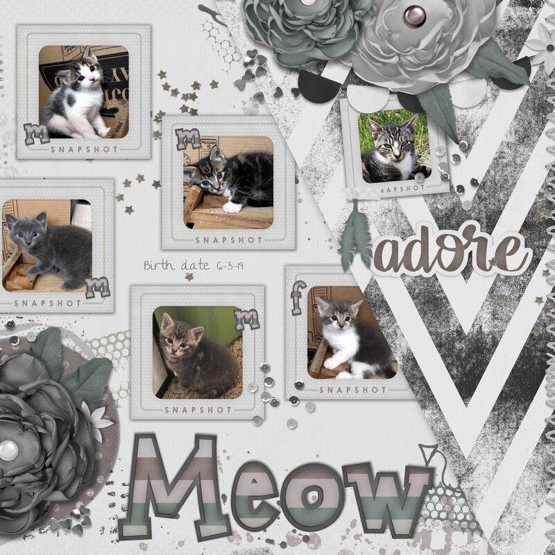 5 Little Kittens, Meow!