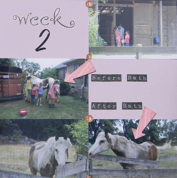 Week 2 of Horse Camp