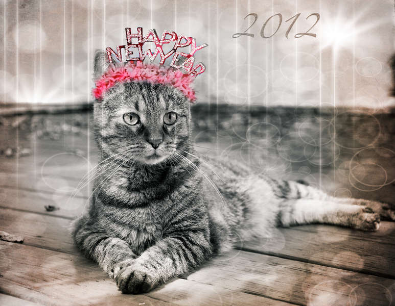Escape Kitty -Happy New Year Darlins