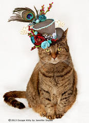 Escape KItty - Hats on Cats