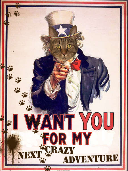 Escape Kitty Needs YOU!