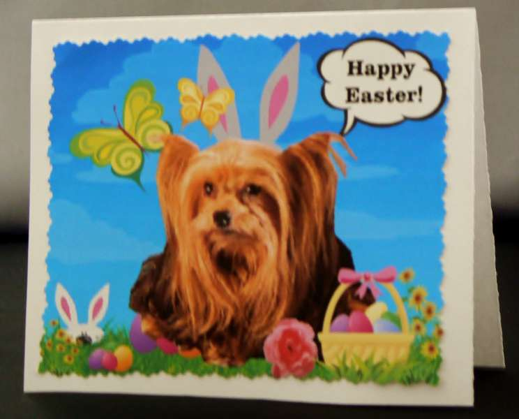 Toto the Easter Bunny