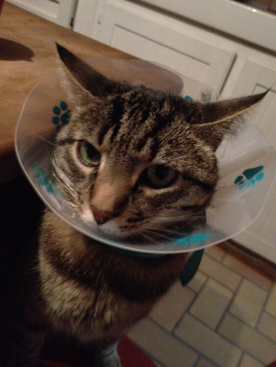 the cone of shame