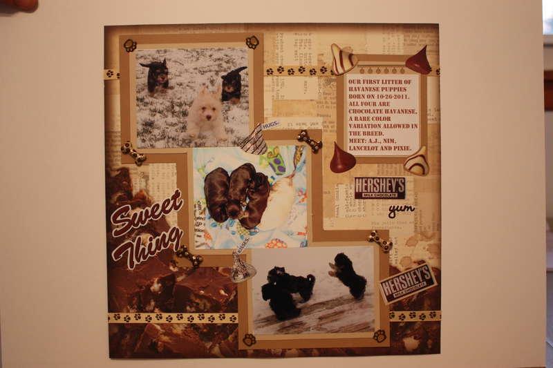 "SWEET CHOCOLATE PUPPIES - ""CHOCOLATE CHALLENGE"""