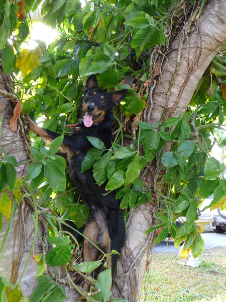 What..  don't all dogs climb trees.?