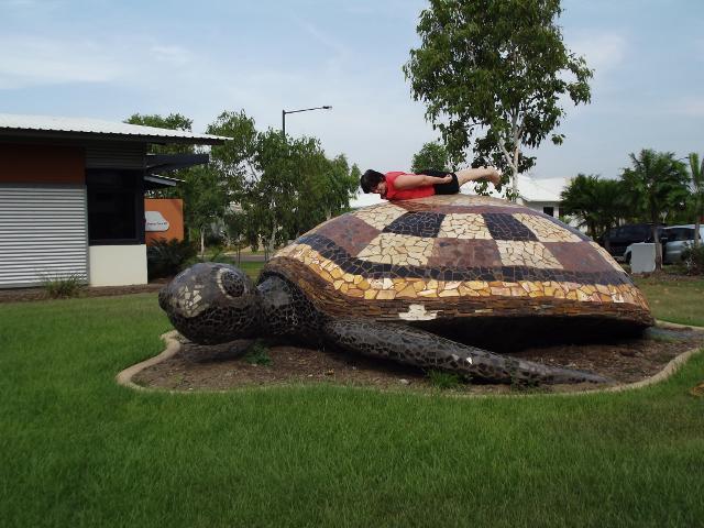 Turtle in Darwin , NT.